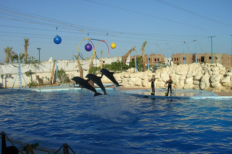 Dolphin Show Tours in Sharm El Sheikh