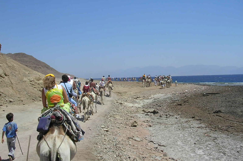 Abu Galum Safari Tours from Sharm El Sheikh